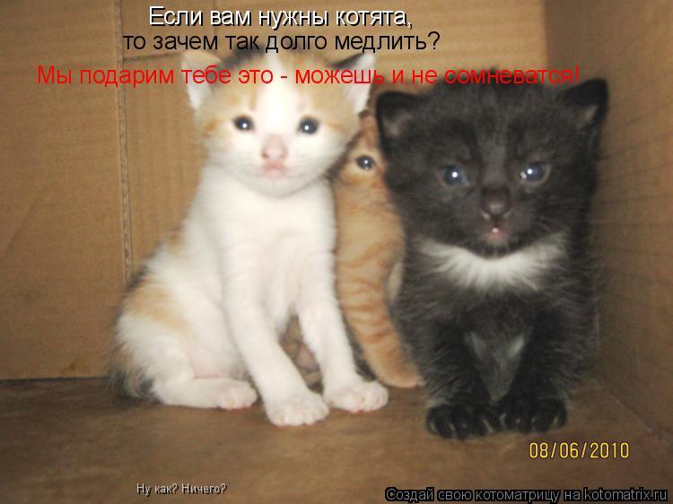 Котоматрица: Если вам нужны котята, то зачем так долго медлить? Мы подарим тебе это - можешь и не сомневатся! Ну как? Ничего?