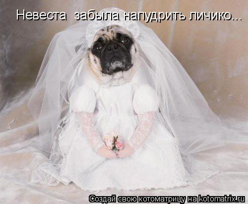 Котоматрица: Невеста  забыла напудрить личико...
