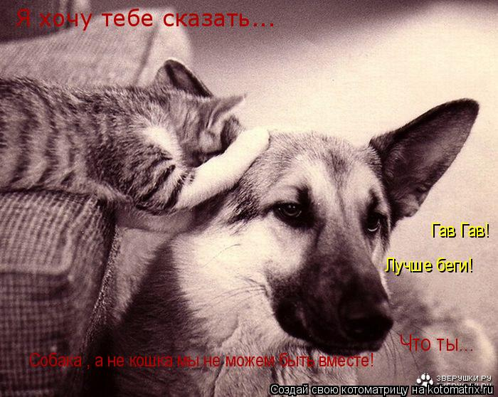 Котоматрица: Я хочу тебе сказать... Что ты...  Собака , а не кошка мы не можем быть вместе! Гав Гав! Лучше беги!