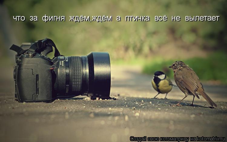 Котоматрица: что  за  фигня  ждём,ждём  а  птичка  всё  не  вылетает