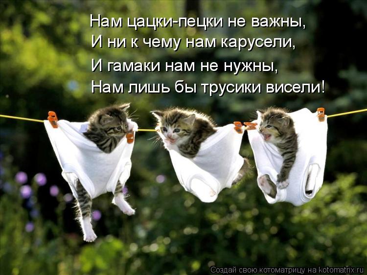 Котоматрица: И ни к чему нам карусели, Нам цацки-пецки не важны, И гамаки нам не нужны, Нам лишь бы трусики висели!