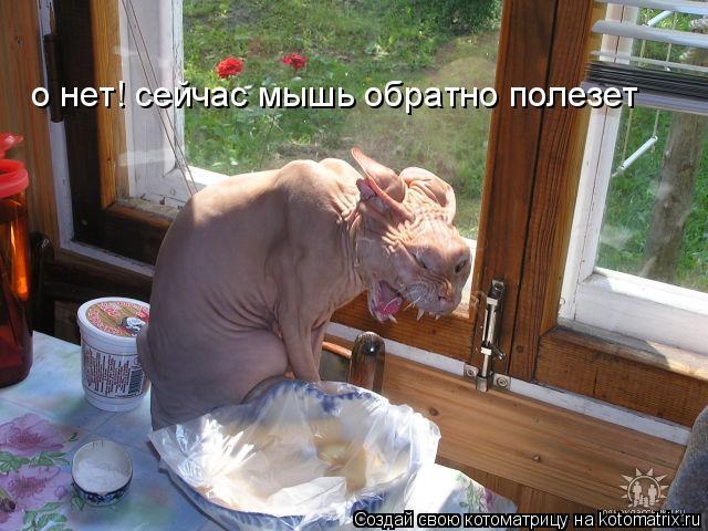 Котоматрица: о нет! сейчас мышь обратно полезет