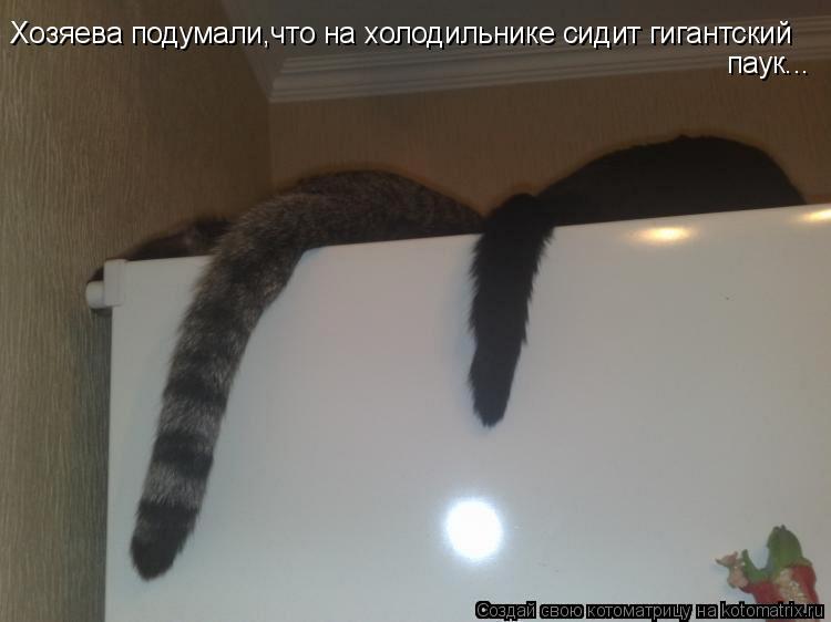 Котоматрица: Хозяева подумали,что на холодильнике сидит гигантский паук...