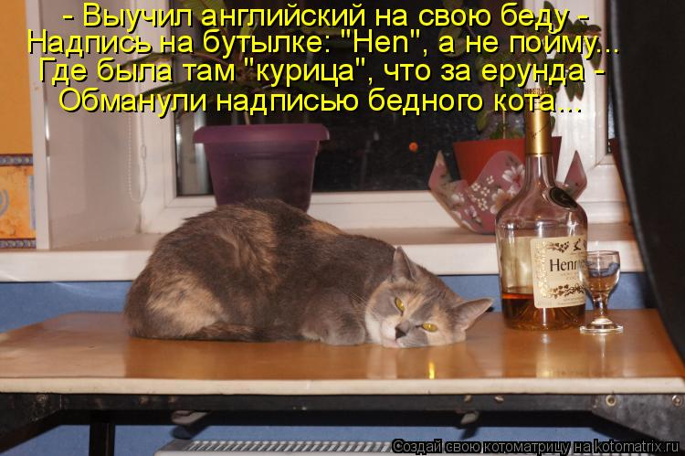 """Котоматрица: - Выучил английский на свою беду -  Надпись на бутылке: """"Hen"""", а не пойму... Где была там """"курица"""", что за ерунда -  Обманули надписью бедного кота..."""
