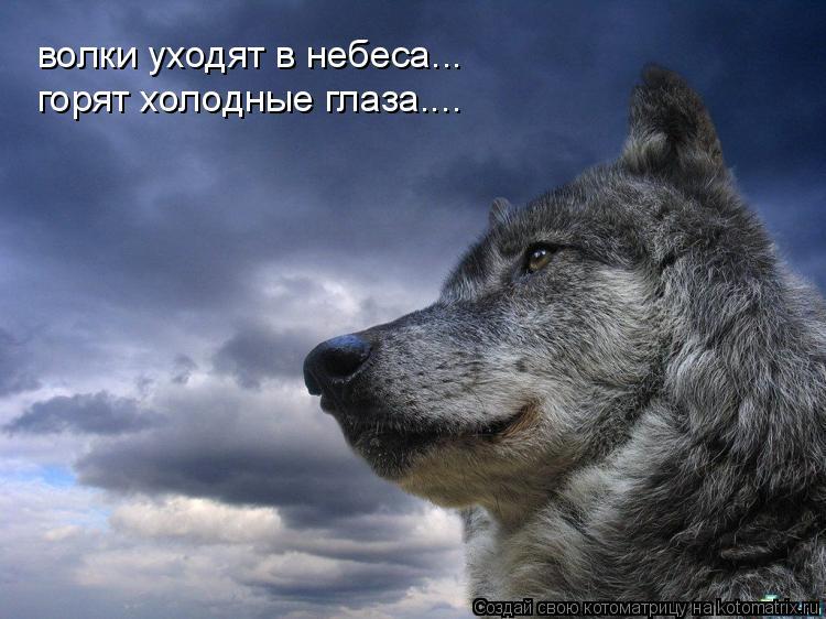 Котоматрица: волки уходят в небеса... горят холодные глаза....