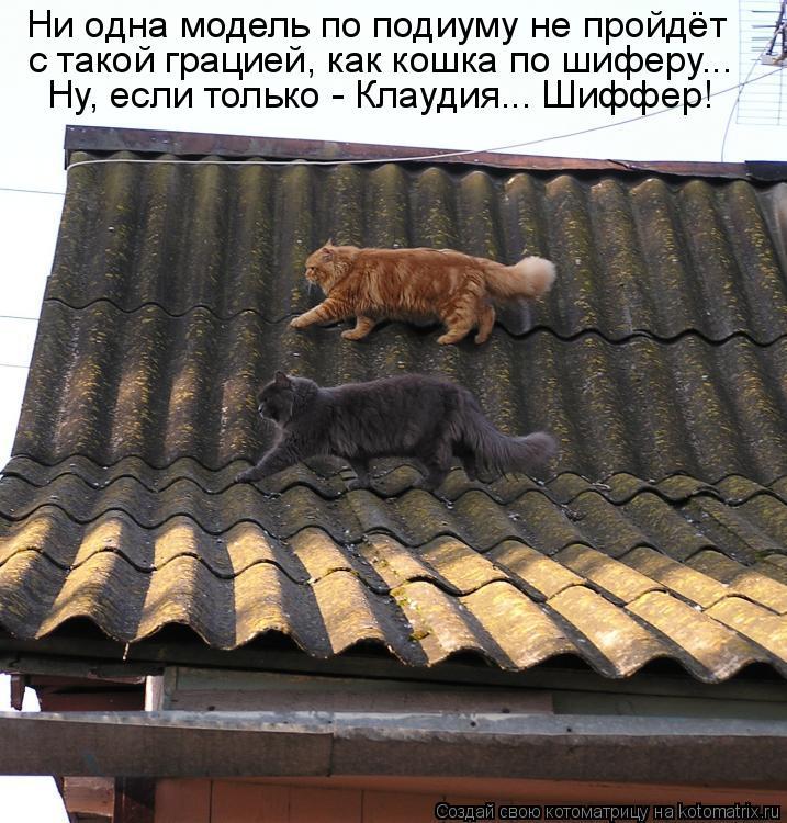 Котоматрица: Ни одна модель по подиуму не пройдёт с такой грацией, как кошка по шиферу... Ну, если только - Клаудия... Шиффер!