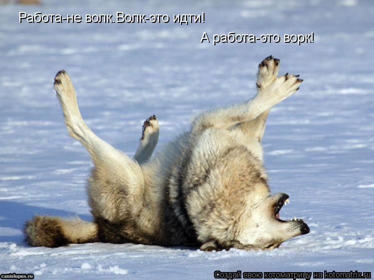 Котоматрица: Работа-не волк.Волк-это идти! А работа-это ворк!