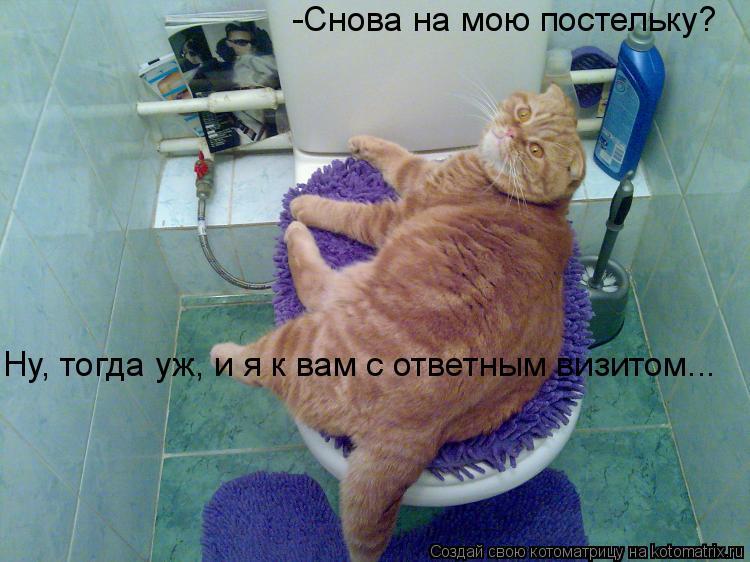 Котоматрица: -Снова на мою постельку?  Ну, тогда уж, и я к вам с ответным визитом...