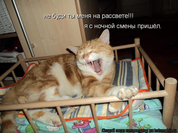 Котоматрица: не буди ты меня на рассвете!!! я с ночной смены пришёл.