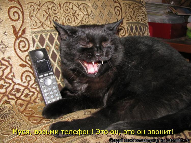 Котоматрица: Китя, возьми телефон! Это он, это он зво Муся, возьми телефон! Это он, это он звонит!