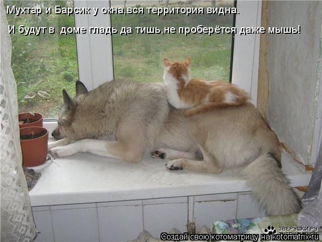 Котоматрица: Мухтар и Барсик у окна,вся территория видна. И будут в  доме гладь да тишь,не проберётся даже мышь!