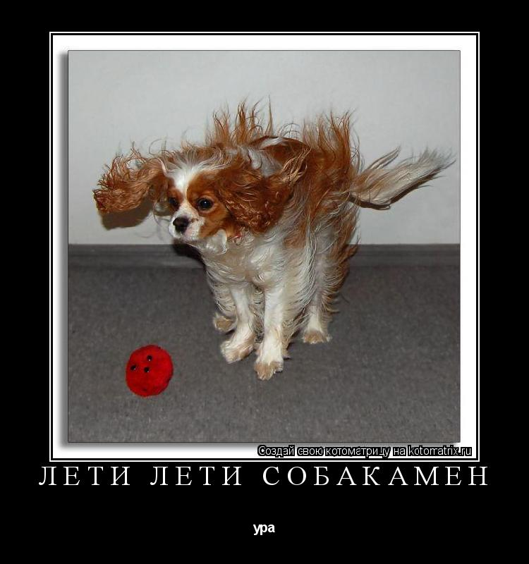 Котоматрица: лети лети собакамен ура