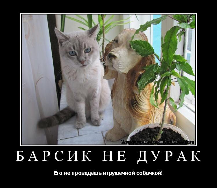 Котоматрица: Барсик не дурак Его не проведёшь игрушечной собачкой!