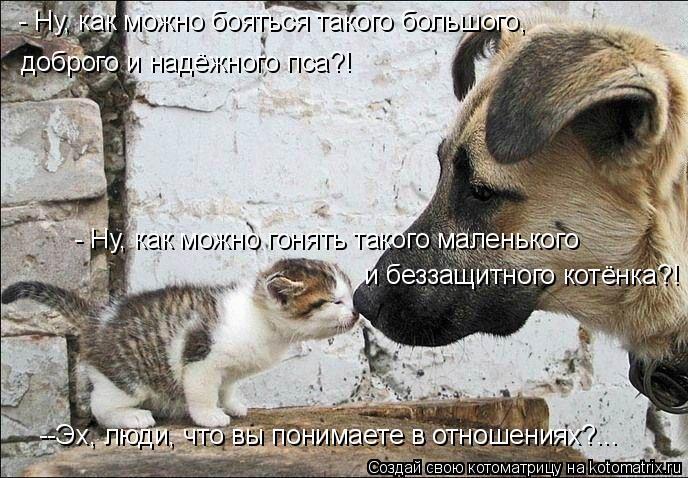 Котоматрица: - Ну, как можно бояться такого большого, доброго и надёжного пса?! - Ну, как можно гонять такого маленького и беззащитного котёнка?! --Эх, люди,