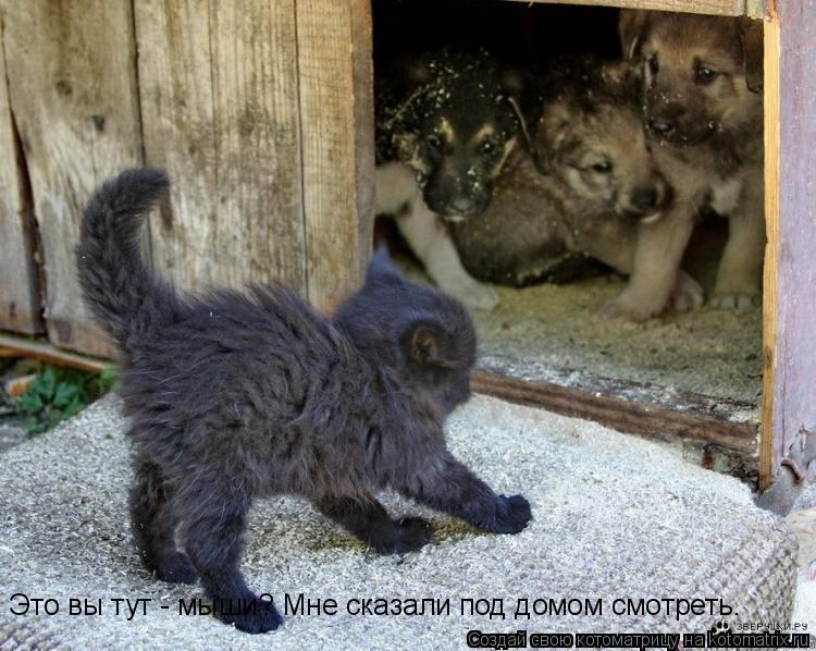Котоматрица: Это вы тут - мыши? Мне сказали под домом смотреть.