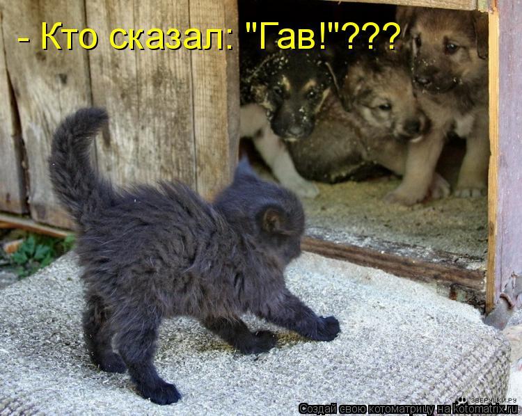 "Котоматрица: - Кто сказал: ""Гав!""???"