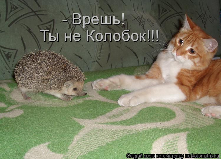 Котоматрица: - Врешь! Ты не Колобок!!!