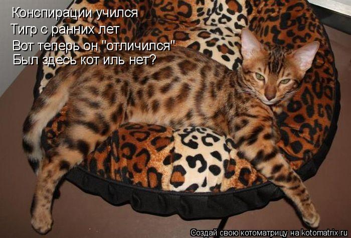 """Котоматрица: Конспирации учился Тигр с ранних лет Вот теперь он """"отличился"""" Был здесь кот иль нет?"""