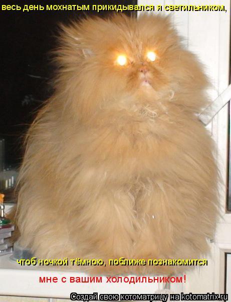 Котоматрица: весь день мохнатым прикидывался я светильником, чтоб ночкой тёмною, поближе познакомится  мне с вашим холодильником!