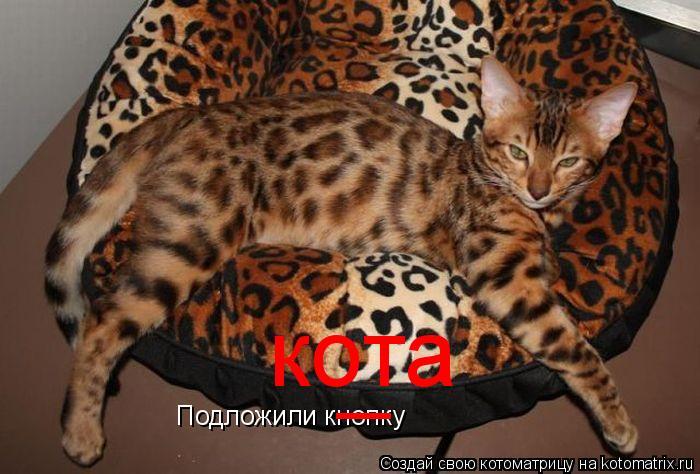 Котоматрица: Подложили кнопку _ кота