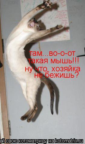 Котоматрица: там...во-о-от такая мышь!!! ну что, хозяйка не бежишь?