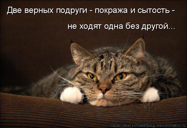 Котоматрица: Две верных подруги - покража и сытость - не ходят одна без другой...
