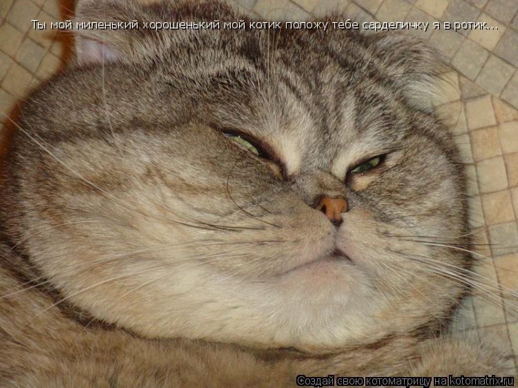 Котоматрица: Ты мой миленький хорошенький мой котик положу тебе сарделичку я в ротик...
