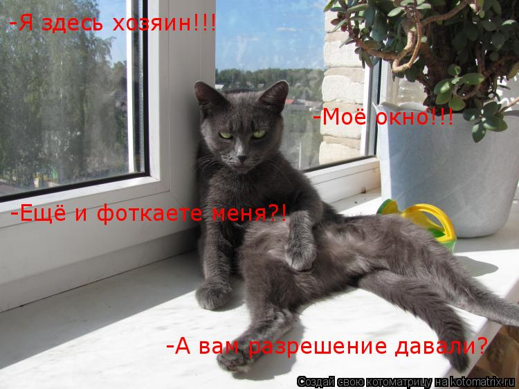 Котоматрица: -Я здесь хозяин!!! -Моё окно!!! -Ещё и фоткаете меня?! -А вам разрешение давали?