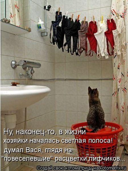"Котоматрица: Ну, наконец-то, в жизни  хозяйки началась светлая полоса! думал Вася, глядя на  ""повеселевшие"" расцветки лифчиков..."