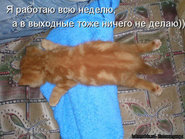 Котоматрица: Я работаю всю неделю, а в выходные тоже ничего не делаю))