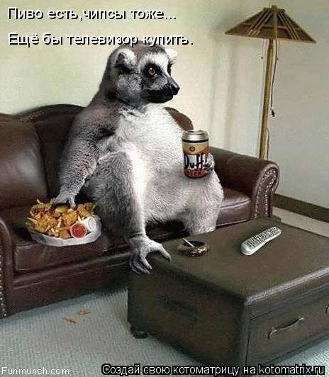Котоматрица: Пиво есть,чипсы тоже...  Ещё бы телевизор купить.