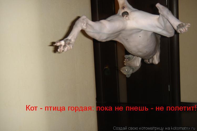 Котоматрица: Кот - птица гордая: пока не пнешь - не полетит!