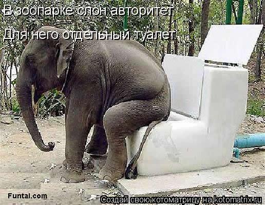 Котоматрица: В зоопарке слон авторитет. Для него отдельный туалет.