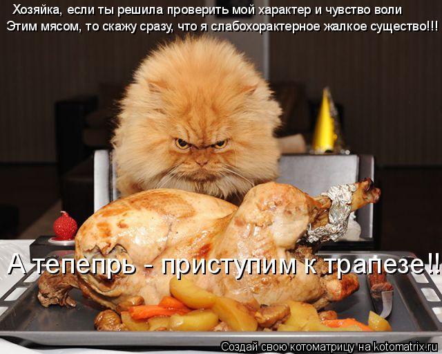 Котоматрица: Хозяйка, если ты решила проверить мой характер и чувство воли Этим мясом, то скажу сразу, что я слабохорактерное жалкое существо!!! А тепепрь