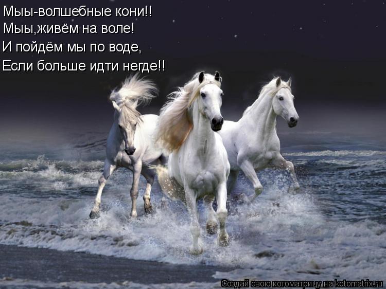 Котоматрица: Мыы-волшебные кони!! Мыы,живём на воле! И пойдём мы по воде, Если больше идти негде!!