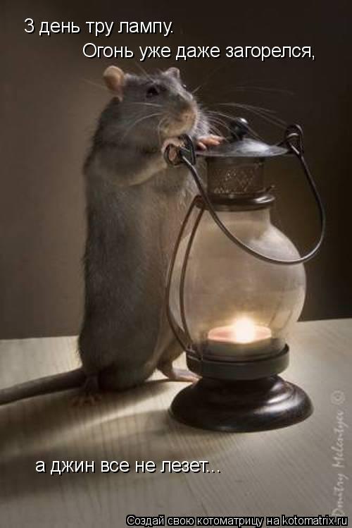 Котоматрица: 3 день тру лампу. Огонь уже даже загорелся, а джин все не лезет...
