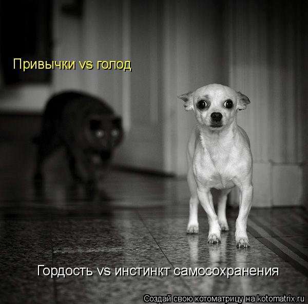 Котоматрица: Гордость vs инстинкт самосохранения Привычки vs голод