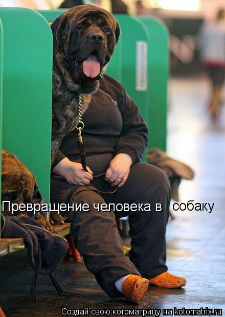 Котоматрица: Превращение человека в  собаку