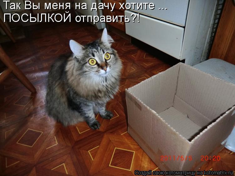 Котоматриця!)))) - Страница 5 912682