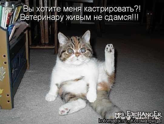 Котоматрица: Вы хотите меня кастрировать?! Ветеринару живым не сдамся!!!