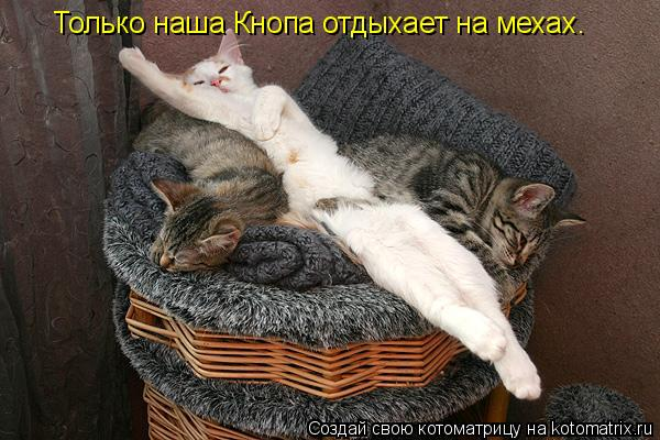 Котоматрица: Только наша Кнопа отдыхает на мехах.