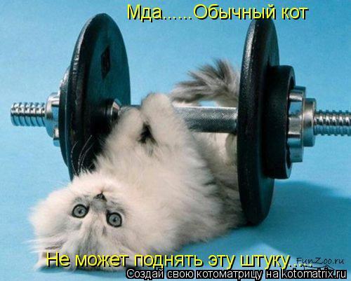 Котоматрица: Мда......Обычный кот Мда......Обычный кот Не может поднять эту штуку.....