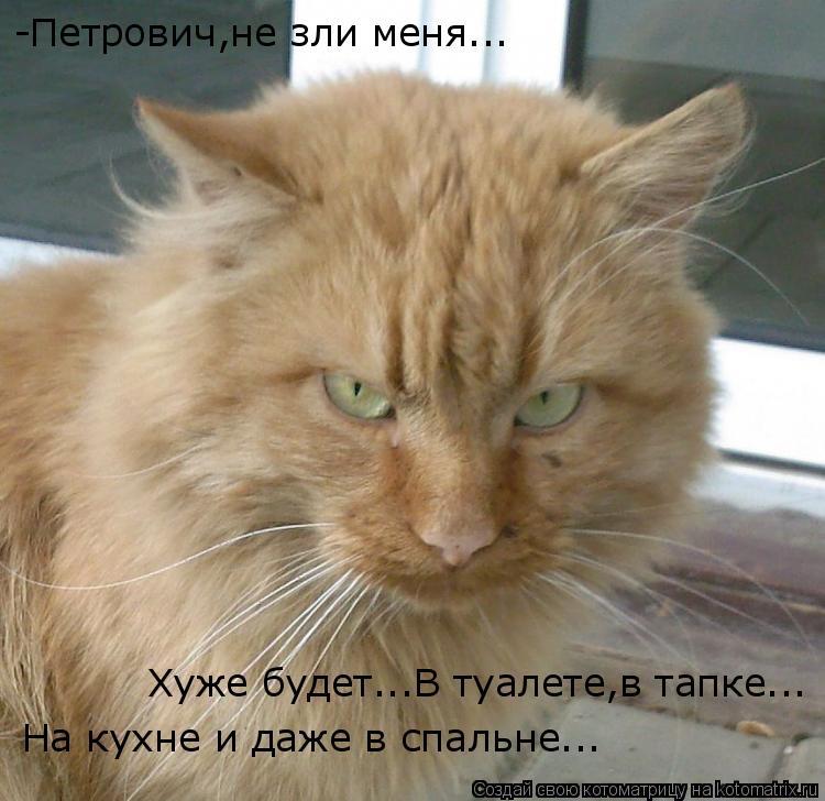 Котоматрица: -Петрович,не зли меня... Хуже будет...В туалете,в тапке... На кухне и даже в спальне...