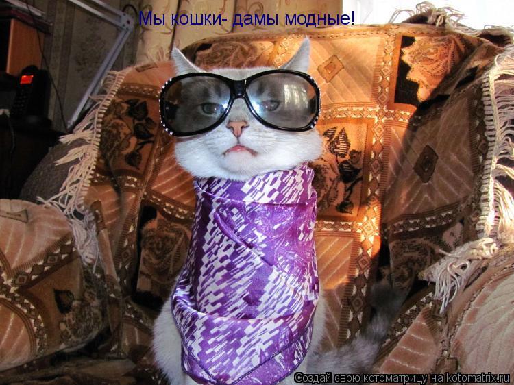 Котоматрица: Мы кошки- дамы модные!