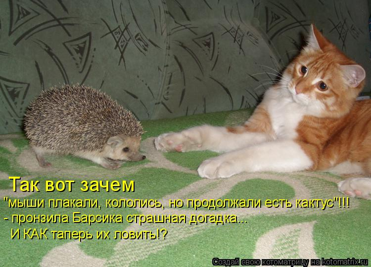 """Котоматрица: Так вот зачем  """"мыши плакали, кололись, но продолжали есть кактус""""!!! - пронзила Барсика страшная догадка... И КАК таперь их ловить!?"""