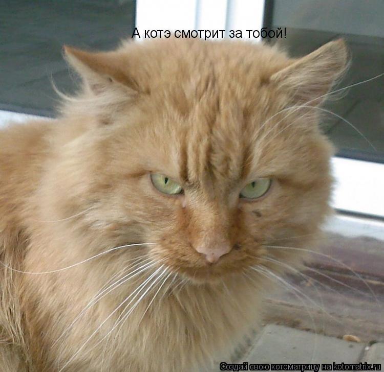 Котоматрица: А котэ смотрит за тобой!