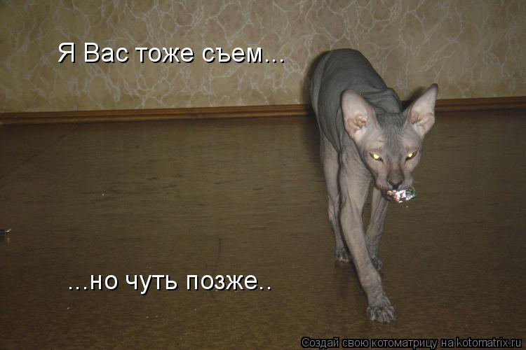 Котоматрица: Я Вас тоже съем...  ...но чуть позже..