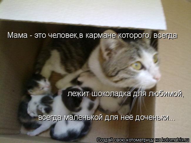 Котоматрица: Мама - это человек,в кармане которого, всегда  лежит шоколадка для любимой, всегда маленькой для неё доченьки...
