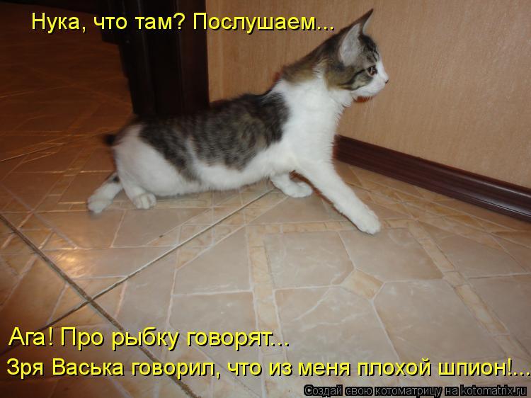 Котоматрица: Нука, что там? Послушаем...  Ага! Про рыбку говорят... Зря Васька говорил, что из меня плохой шпион!...
