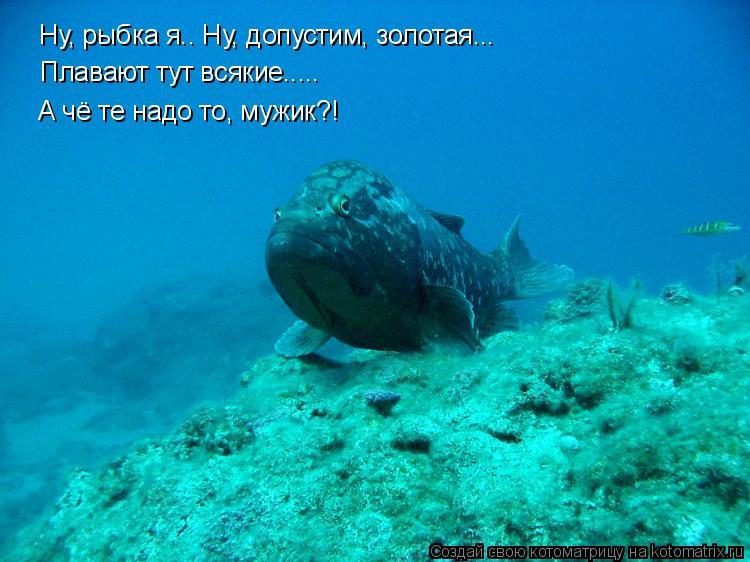 Котоматрица: Ну, рыбка я.. Ну, допустим, золотая... Плавают тут всякие..... А чё те надо то, мужик?!